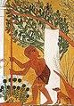 Punica granatum in scene of gardener using a Shaduf, from Tomb of Ipuy.jpg