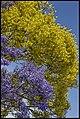 Purple Yellow Blue at Grafton-1 (22653865022).jpg