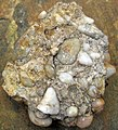 Quartz-pebble conglomerate (Sharon Conglomerate, Lower Pennsylvanian; Toboso East railroad cut, Licking County, Ohio, USA) 6 (33552322054).jpg