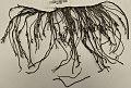 Quipu fragment.jpg