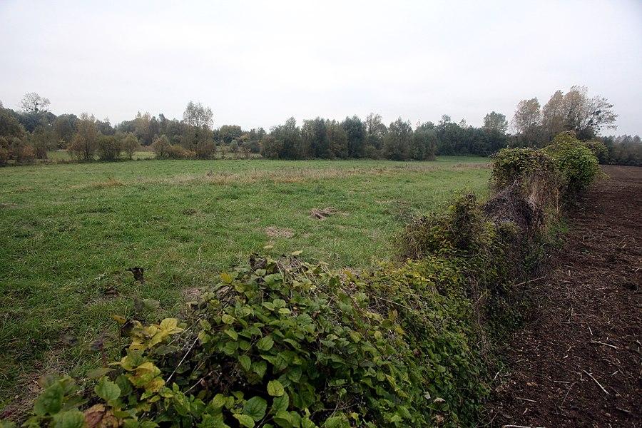RNN de l'étang et prairie humide des Paquis à Larzicourt (Marne).