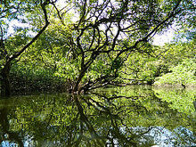 Freshwater swamp forest - Wikipedia