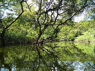 Freshwater swamp forest - Ratargul Swamp Forest in Gowainghat, Sylhet, Bangladesh