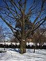 Red Oak (28051044649).jpg