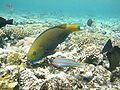 Red sea-reef 3354.jpg