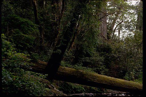 Redwood National Park REDW9377