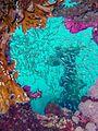 Reef0855 - Flickr - NOAA Photo Library.jpg