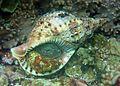 Reef1119 - Flickr - NOAA Photo Library.jpg