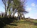 Rejuvenating Hedgerow - geograph.org.uk - 767288.jpg