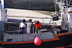 Retour de la pêche à la seiche du fileyeur Jason IV (13).JPG