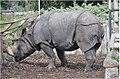Rhino (9638652290).jpg