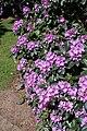 Rhododendronpark Bremen 20090513 252.JPG