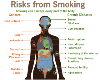Health effects of tobacco circumstances, mechanisms, and factors of tobacco consumption on human health