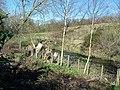 River Deerness flowing at the foot of Bleach Green garden - geograph.org.uk - 1227889.jpg