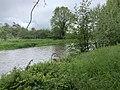 Rivière Cousin - Vault-de-Lugny (FR89) - 2021-05-17 - 4.jpg