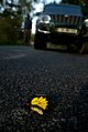Roadkill DSC8606.jpg