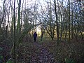 Roadside copse - geograph.org.uk - 1077750.jpg