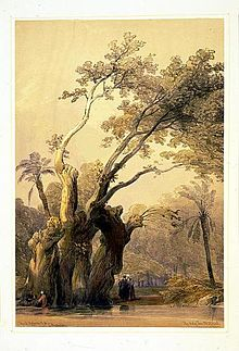 David Roberts Painter Wikipedia