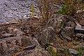 Rocks (1583956051).jpg