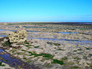 Gault - An exposed surface of Gault clay on the foreshore near Beachy Head, East Sussex