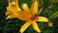 Rokko alpine botanical garden14s2816.jpg