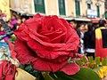 Rose HDR.jpg