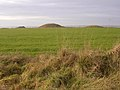 Round barrows on Handley Hill, close to the Ackling Dyke - geograph.org.uk - 93915.jpg