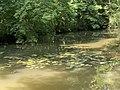 Ruisseau Montbattant Parc Château Pont Veyle 2.jpg