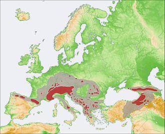 Rupicapra - Range of Rupicapra during the Holocene (grey) and present range (red)