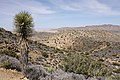Ryan Mountain Trail 03.jpg
