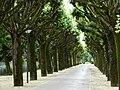 Saintes, Charente-Maritime, France - panoramio - M.Strīķis.jpg