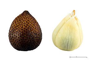 Salak - Salak fruit (Salah pondoh cultivar)