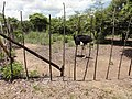Salima, Malawi - panoramio (15).jpg