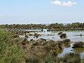 Sansouire et étang en Camargue.jpg