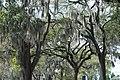 Savannah - panoramio (4).jpg