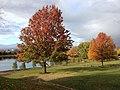 Schaumburg, IL, USA - panoramio (19).jpg
