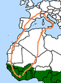 Schleifenzug westziehender Milvus migrans.png