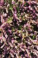 Seattle - Parsons Gardens 32.jpg