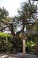 Shakkizan Enkoji 07.JPG