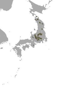 Shinto Shrew area.png