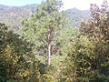 Shivapuri National Park (37).jpg