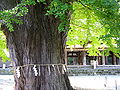 Shrine Shingu-Kumano-jinja 3.JPG