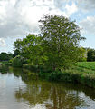 Shropshire Union Canal at Coxbank, Cheshire - geograph.org.uk - 1597804.jpg