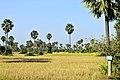 Siem Reap, campos 03.jpg