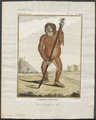 Simia satyrus - 1773-1807 - Print - Iconographia Zoologica - Special Collections University of Amsterdam - UBA01 IZ19800052.tif