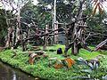 Singapore Zoo (10).jpg