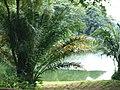 Singapore Zoo (14326307692).jpg