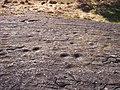 Skålgropshällen med ca 520 skålgropar i Pryssgården, Östra Eneby sn, Norrköping, den 4 mars 2008, bild 24.jpg