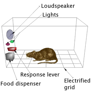 Operant conditioning chamber laboratory apparatus used to study animal behavior