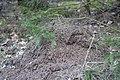 Skogssjön 05.jpg